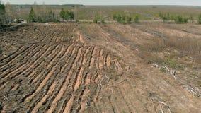 Bosrestauratie Ecologiebehoud Het lucht schieten stock footage