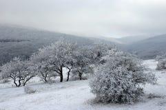 Bosrijke heuvels die met sneeuw worden behandeld Stock Afbeelding