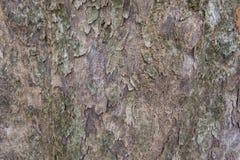 Bosrijke textuur Royalty-vrije Stock Foto