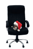 In boss chair Royalty Free Stock Photography