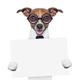 Boss dog banner. Funny boss dog holding a blank banner Royalty Free Stock Image