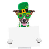 Boss dog banner. St patricks  day dog holding a blank banner Stock Photography