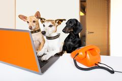Boss management dogs in office stock photos