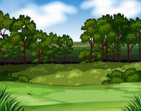 Bosscène met bomen en gebied Stock Fotografie