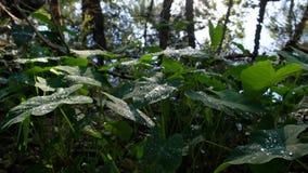 Bosscène met cipresbomen langs rivier en weelderige vegetatie stock video