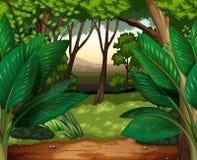 Bosscène met veel bomen stock illustratie