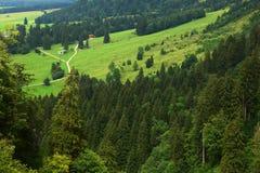 Bossen in alpen stock afbeelding