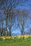 Bossen in de lente Royalty-vrije Stock Fotografie