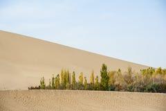 Bossen in de woestijn stock foto's