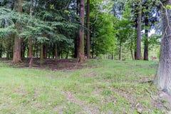 Bossen die grond in het dorp van Velke-mezirici huting Stock Afbeeldingen