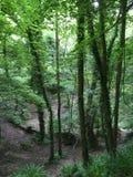 Bossen, groen gebied, zwart park Denham Royalty-vrije Stock Foto