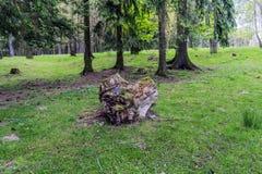 Bossen jachtgebied in het dorp van Velke-mezirici in stock afbeelding
