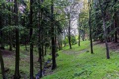 Bossen jachtgebied in het dorp van Velke-mezirici in royalty-vrije stock foto