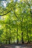 Bossen met rijpe beukbomen in het oude landgoed Groenendaal van het land royalty-vrije stock fotografie