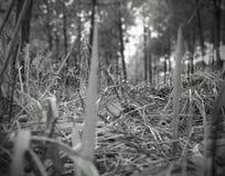 bossen met ruwe stemming stock fotografie