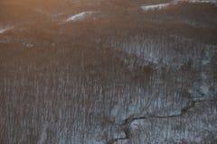 Bossen in sneeuw in Hokkaido, Japan stock afbeeldingen