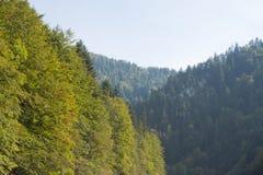 Bossen in Tatras, Slowakije Royalty-vrije Stock Afbeelding