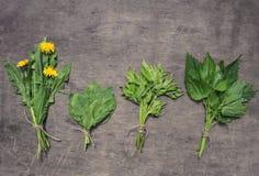 Bossen van de lente eetbare wilde kruiden: de netel, paardebloem, goutweed stock afbeelding