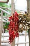 Bossen van droge Spaanse pepers en baaibladeren Stock Foto's