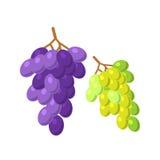 Bossen van druiven vectorillustratie Stock Afbeeldingen