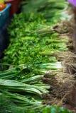 Bossen van groen het de markt Stock Fotografie