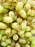 Bossen van groene druiven Royalty-vrije Stock Afbeelding