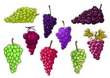 Bossen van groene en rode druiven stock illustratie
