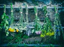Bossen van het helen van kruiden stock fotografie