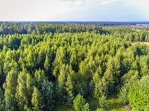 Bossen van hierboven, Wit-Rusland royalty-vrije stock foto