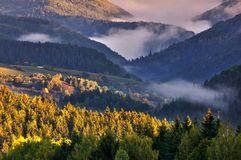 Bossen van Lage Tatras royalty-vrije stock fotografie