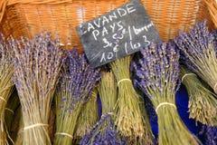 Bossen van lavendel Royalty-vrije Stock Afbeelding