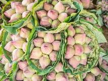 Bossen van lotusbloem Stock Afbeeldingen