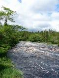 Bossen van Nova Scotia royalty-vrije stock afbeelding