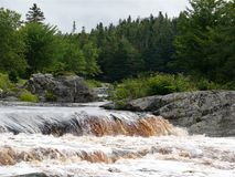 Bossen van Nova Scotia royalty-vrije stock fotografie