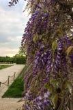 Bossen van purpere bloemen royalty-vrije stock afbeelding