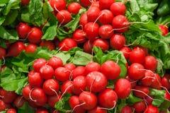 Bossen van radijzen in de markt stock fotografie
