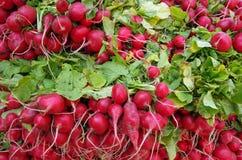 Bossen van rode radijzen met greens royalty-vrije stock fotografie