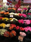 Bossen van rozen Stock Foto