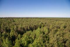 Bossen van Saaremaa Stock Fotografie