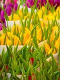 Bossen van tulpen stock afbeelding