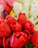 Bossen van Tulpen in close-up, rood, wit, purper roze, geel, Stock Foto's