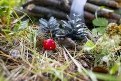 Bossprookje, Paddestoelbuilen en bosbrandhout stock foto's