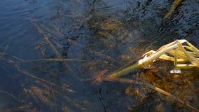 Bosstroom voor onderwater de aardlandschap van het rotszeewier stock footage