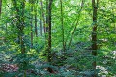 Bosstruikgewas Vergankelijk bos stock afbeelding