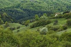 Bostads- område av den bulgarian byn Plana i skog och olika träd med det nya bladet och blomningen på vår Royaltyfri Fotografi