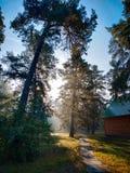 bostextuur van de mystieke installatie de groene boom met mist royalty-vrije stock foto
