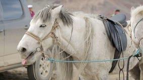 Bostezos grises del caballo metrajes