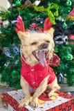 Bostezos pequeños de una chihuahua del perro en cuernos de los ciervos y un traje del Año Nuevo en el fondo del árbol de navidad fotografía de archivo