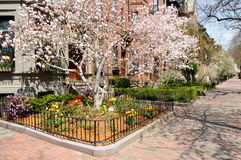 Boston Back Bay in early spring Stock Photography