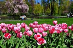 Boston city from tulips garden Royalty Free Stock Photos